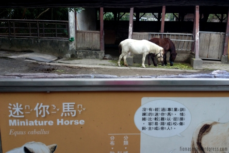 Always very excited to see horses! They're so elegant haha.