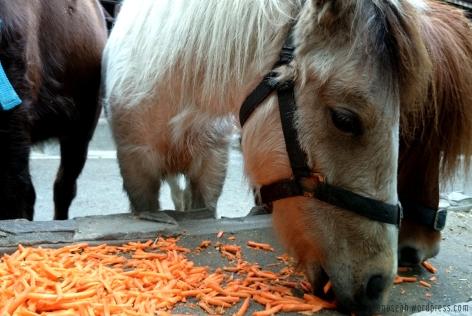 Miniature horses! It was their feeding time.