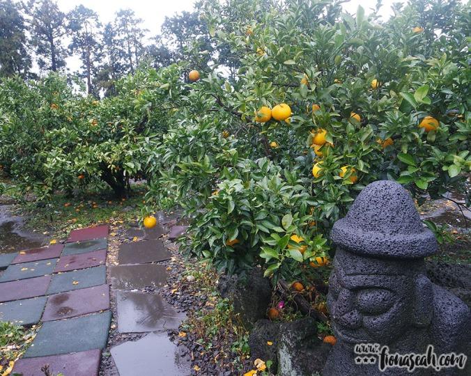 Jeju Orange Farm