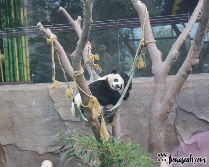 The panda from the opposite angle.. clearly just pretending to sleep. Lazy, lazy.
